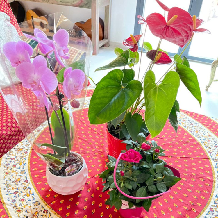 Pot dan bunga segar